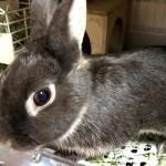 ご飯を食べないことは命の危険に直結する!ウサギの命を守るためにやるべきこと