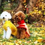 手作りのオリジナル愛犬ウエアにチャレンジ!おすすめの愛犬ウエア講座・教室