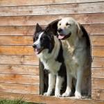 愛犬の室内飼いと外飼いのメリットとデメリットは?外飼いに向いている犬種や注意点も紹介!