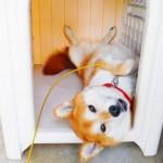 犬は室内飼いが良い?外飼いが良い?室内飼いと外飼いのメリットとデメリットは?