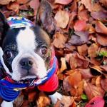 愛犬と紅葉狩りを楽しもう!おすすめ紅葉スポットや、気を付けたいこと