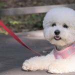 小型犬でも運動量が必要な犬種は?1日に必要な散歩の頻度や時間は?