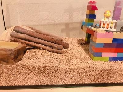 ヒョウモントカゲモドキの家 Leopard gecko house