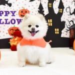 愛犬と一緒にハロウィンを楽しもう!~犬用仮装グッズや犬用手作りごはん~