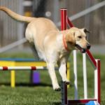 愛犬と一緒にスポーツの秋!初心者でも参加しやすいドッグスポーツや向いている犬種は?