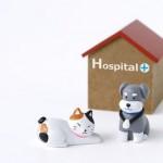 ペット保険は加入しておくべき?…我が家が解約した理由