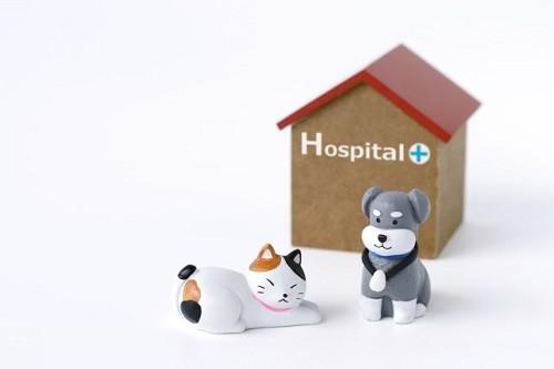 犬と猫の人形