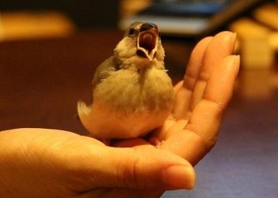 手のひらで鳴く小鳥