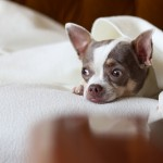 犬アレルギーを発症!アレルギーの原因を知り、愛犬と一緒に暮らす3つの対策