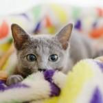 猫はさむがり?寒さに弱い猫の特徴と対策、おすすめ暖房器具