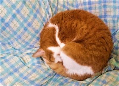 まんまる猫