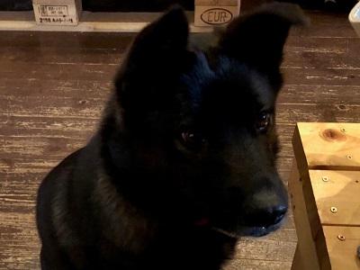 保護犬、くるみちゃん