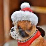 愛犬と一緒にクリスマスを楽しもう!可愛いサンタ服・かぶり物・クリスマスインテリアをご紹介