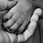 人と動物の間で病気がうつる!?共通感染症とは?感染経路、症状や予防方法は?