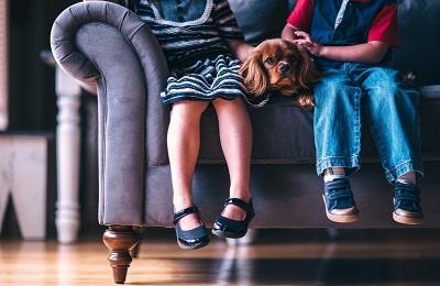 ソファに座る犬と人