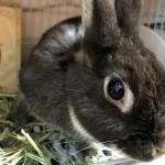 ウサギのトイレ臭・尿石予防・除去にオススメのトイレアイテム4点をご紹介!!