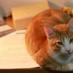 ペット資格を通信講座で取得!:②民間資格で仕事はできるのか考えてみた