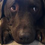 犬はどのくらい人間の言葉を理解しているの?実験してみました!【動画で検証】