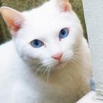 愛猫をもっと可愛く!初心者でもすぐ実践できるフォトジェニックな写真の撮り方とは?