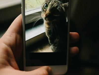 スマホに写る猫