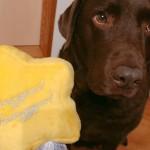 ペコボックスとドギーボックス、愛犬用お楽しみボックスを注文・比較!