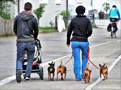犬と散歩するカップル