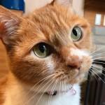 ペット保険を利用している理由と見直しの結果を紹介