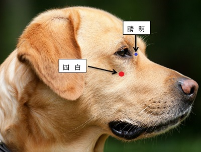 犬の目のツボ