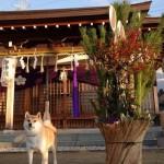 愛犬と一緒に初詣!ペット祈願ができる神社5選と初詣の注意点☆