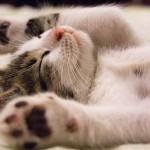猫の可愛い仕草には意味がある!愛おしい動き、その意味とは?