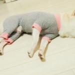 愛犬用の部屋着のメリットとおすすめウエア6選