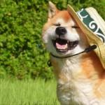 愛犬の「人間みたいな仕草(しぐさ)」9選!