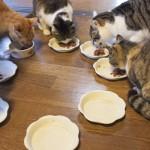 ペットの食器、洗ってもぬるぬる…原因とヌメリを取る3つの対策。ペット用食器洗剤が便利?