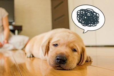 いびきをかく犬