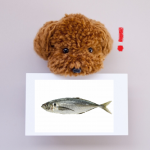 犬は肉食だけど魚も食べる?魚を与える時のメリット、デメリットは?