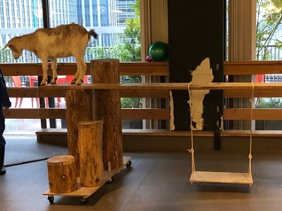 1本橋を渡る山羊