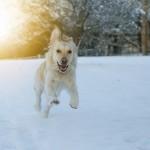愛犬と雪遊びを満喫!愛犬用おすすめスノーウエア&ブーツ&レッグガードを紹介