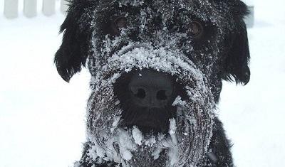 雪まみれの犬