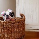 犬アートでお部屋の雰囲気をガラッと変身。モダンでおしゃれな犬アートを紹介。