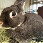 ウサギのウンチ、色や大きさ、臭いで健康チェック。ウンチは大事なメッセージ!