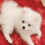愛犬の静電気対策。静電気のデメリットや静電気防止アイテムの紹介◎