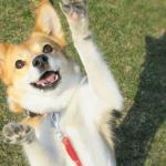 犬と関わる仕事「ドッグトレーナー」「ペットシッター」「アニマルセラピスト」の仕事内容と必要な資格