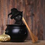 黒猫の可愛さを知ってほしい!黒猫の魅力を紹介します☆