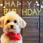 愛犬の記念日におすすめ!愛犬が安心して食べられる犬用ケーキ10選