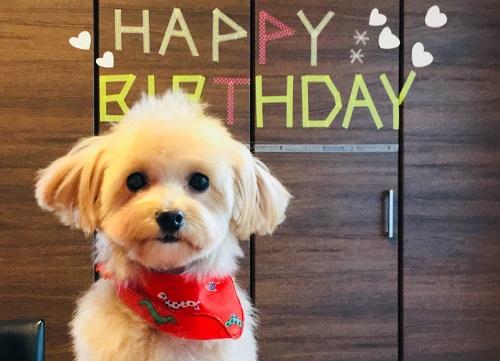 犬の誕生日