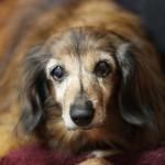 必要になる前から知っておきたい、愛犬の老化現象とケア方法