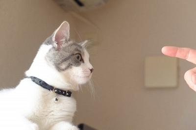 指を見つめる猫