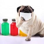 ペットの新型コロナウイルス感染症(COVID-19)予防のために飼い主ができること