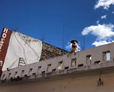 屋根からひょっこりのわんちゃん