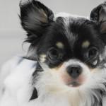 愛犬に人間のシャンプーはダメ!おすすめの犬用シャンプー6選